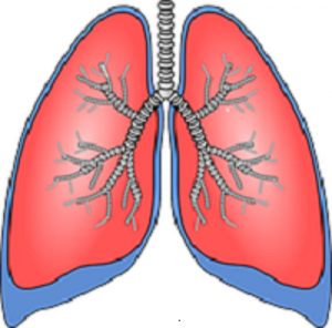 lungs-154282__180